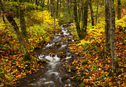 Autumn Leaves Posters - Autumn Stream Poster by Mike  Dawson