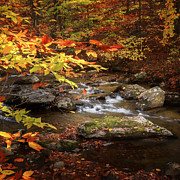 Connecticut Landscapes Prints - Autumn Stream Square Print by Bill  Wakeley