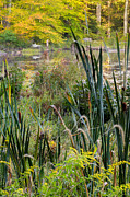 Cattail Photos - Autumn Swamp by Bill  Wakeley