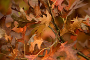 Ann Bridges - Autumn Swirl