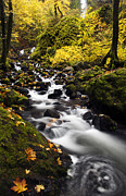 Columbia River Gorge Prints - Autumn Swirl Print by Mike  Dawson