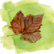 Autumn Leaf Posters - Autumn Sycamore Leaf Poster by Betty LaRue