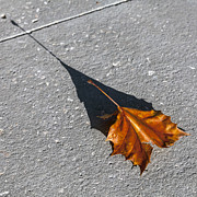 Lynn Palmer - Autumn Sycamore Leaf