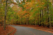 Monmouth County Prints - Autumn To The Left - Holmdel Park Print by Angie McKenzie