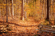 Natchez Trace Parkway Metal Prints - Autumn Trail Metal Print by Brian Jannsen