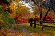 Cheryl Cencich Art - Autumn Trail by Cheryl Cencich