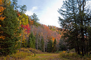 Adirondacks Photo Posters - Autumn Trail in Eagle Bay New York Poster by David Patterson