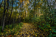 Waukesha County Posters - Autumn Trail Poster by Randy Scherkenbach