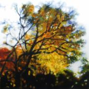 Photo Realism Paintings - Autumn Tree by Cap Pannell