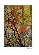 Xoanxo Cespon Prints - Autumn Tree Composition 2 Print by Xoanxo Cespon