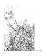 Xoanxo Cespon Prints - Autumn tree in black and white  Print by Xoanxo Cespon