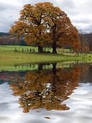David Pringle - Autumn Tree Reflection