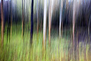 Deliberate Metal Prints - Autumn Tree Trunks in Strid Wood Metal Print by Mark Sunderland