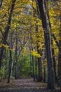Pure Michigan Framed Prints - Autumn Trees Alley Framed Print by Sebastian Musial