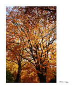 Xoanxo Cespon Prints - Autumn Trees in Aerdenhout Print by Xoanxo Cespon