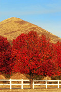 Country Scene Photos - Autumn Trees In The Country by Tracie Kaska