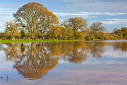 River Flooding Photo Posters - Autumn Trees Poster by Sebastian Wasek