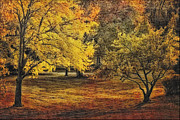 Outdoor Images Framed Prints - Autumn Trees Framed Print by Tom York