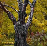 Autumn Trees3 Print by Vladimir Kholostykh