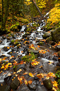 Waterfall Prints - Autumn Tumbles Down Print by Mike  Dawson