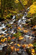 Autumn Tumbles Down Print by Mike  Dawson