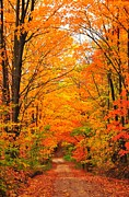 Artist Set Posters - Autumn Tunnel of Trees Poster by Terri Gostola