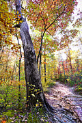 Beautiful Creek Posters - Autumn Umbrella Poster by Debra and Dave Vanderlaan