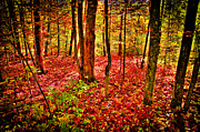 Autumn Foliage Photos - Autumn Under the Maples by David Patterson