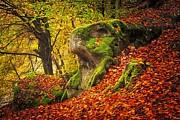 Autumn Walk In Forrest Print by Maciej Markiewicz