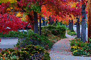 Mick Anderson Prints - Autumn Walk in Grants Pass Print by Mick Anderson