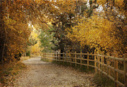 Autumn Scene Photos - Autumn Walk by Juli Scalzi