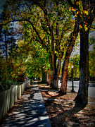 Prescott Photos - Autumn Walkways HDR by Aaron Burrows
