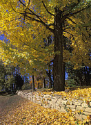 Indiana Autumn Art - Autumn Wall - FM000082 by Daniel Dempster