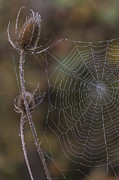 Spider Web Art - Autumn Web by Angie Vogel