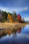 Otsego Lake Posters - Autumn Wetlands Poster by Megan Noble