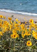 Barbara McMahon - Autumn Wildflowers at the Beach