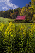 Red Roof Photo Posters - Autumn Wildflowers Poster by Debra and Dave Vanderlaan