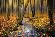 Woodland Scene Prints - Autumn Woodland Print by Ian Hufton
