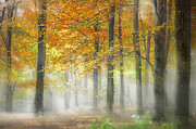Woodland Scene Prints - Autumn Woodland in the Mist Print by Ian Hufton