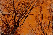 Bonnie Bruno - Autumn Woods