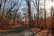 Toni Kistner - Autumn Woods in Rockhill...