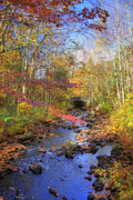 Autumn Scenes Metal Prints - Autumn Woods Metal Print by Joann Vitali