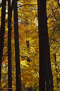 Tannis  Baldwin - Autumn Yellow 1