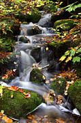 Guy St-Vincent - Autumnal Cascades