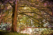 Garden Scene Photos - Autumnal Colors in the Summer Time. De Haar Castle Park by Jenny Rainbow