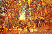 Jenny Rainbow - Autumnal Display