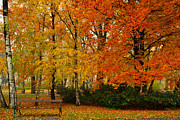 Styria Photos - Autumnal Park by Daniel Gerd Poelsler