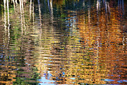 Autumn Photos Digital Art Prints - Autumnal Reflections I Print by Natalie Kinnear
