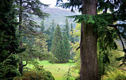 Fine Photography Art Framed Prints - Autumnal Trees in Benmore Botanical Garden. Scotland Framed Print by Jenny Rainbow