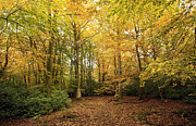 Autumn Photos Digital Art Prints - Autumnal Woodland I Print by Natalie Kinnear